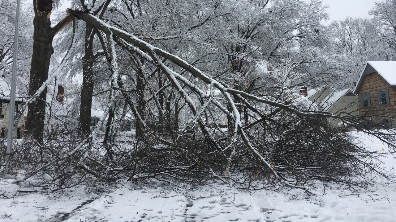 Trees down in storm.jpeg