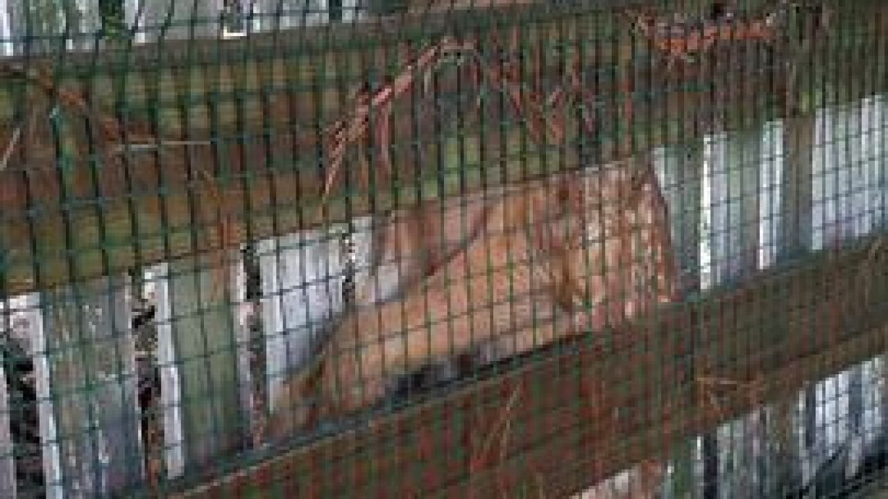 Bay Village police rescue deer stuck in fence