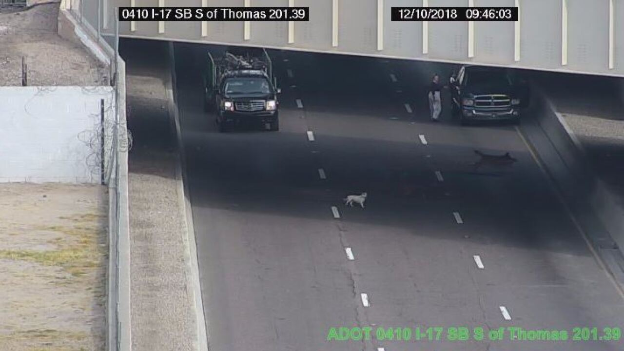 FREEWAY DOGS 4.JPG