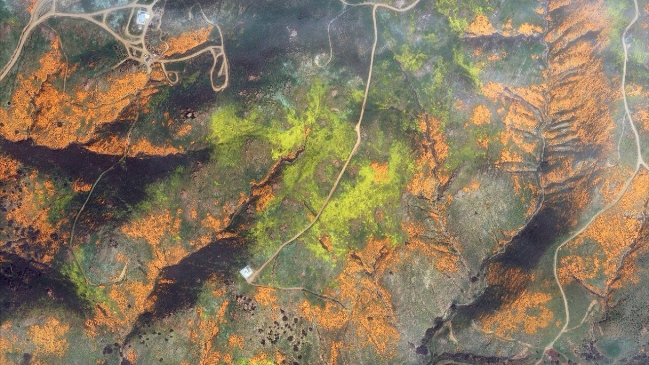 Marvel at the beauty of California's wildflower super bloom as seen from space