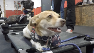 Go Team Therapy Dogs ready to help manage the pressure