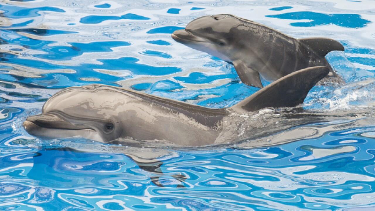 SeaWorld Entertainment Inc. is eliminating jobs