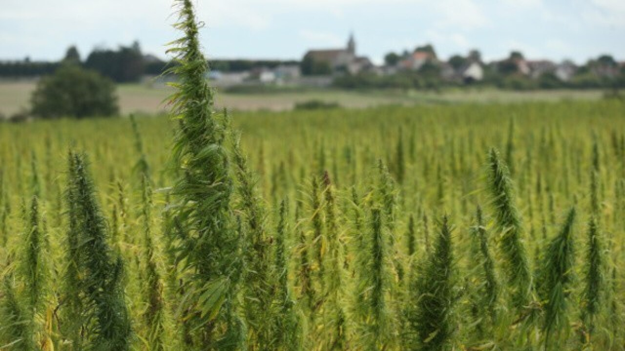 Wisconsin's growing hemp industry to get boost under bill