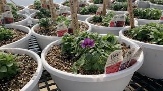 Mps Greenhouse