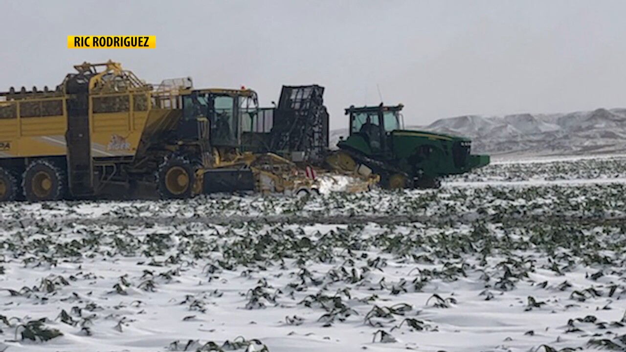 Montana Ag Network: a challenging year for sugarbeet growers