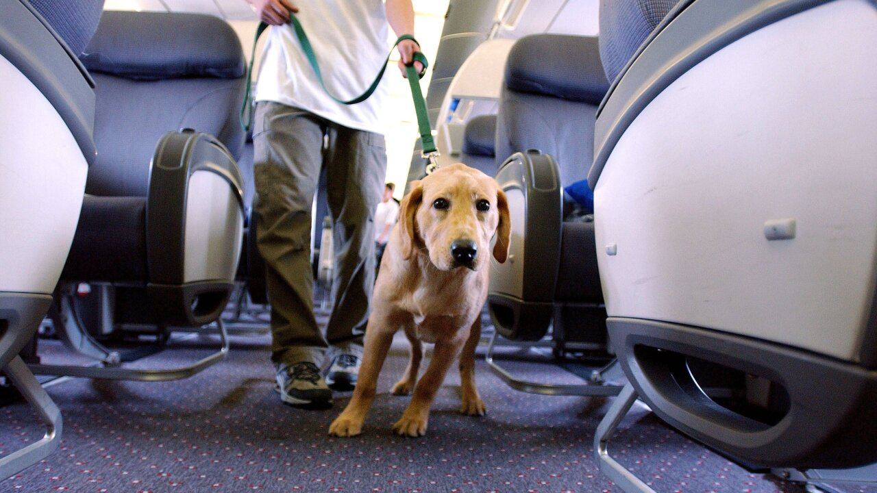 New guidelines announced for service and emotional support animals on planes