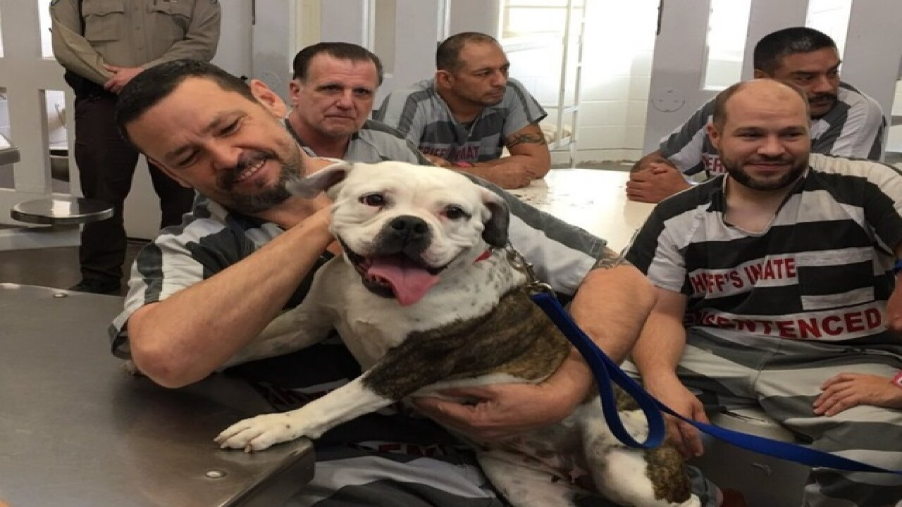 MASH unit dogs to help veteran inmates