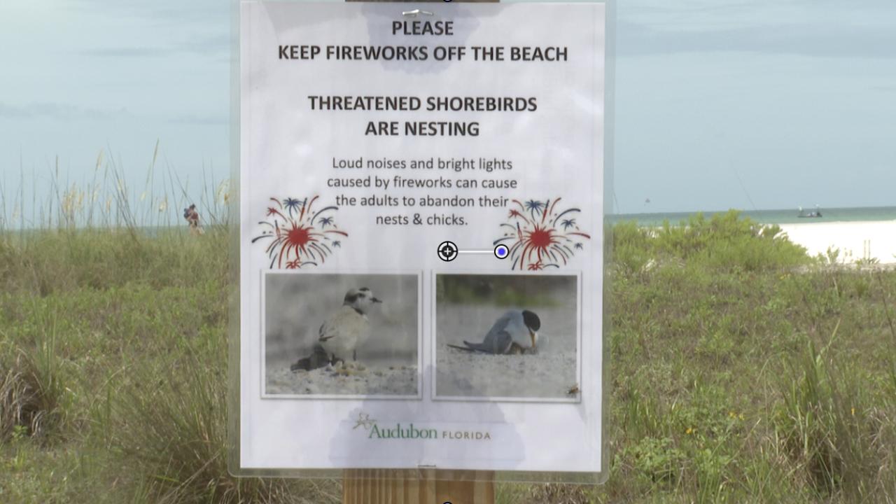 firework safety-shore birds (1).png