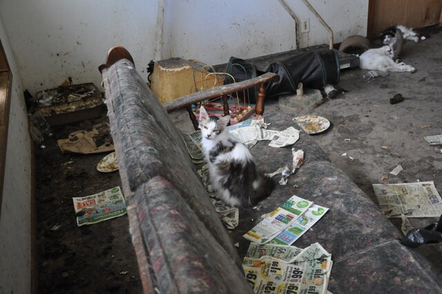 60+ cats rescued from hoarder's home [PHOTOS]