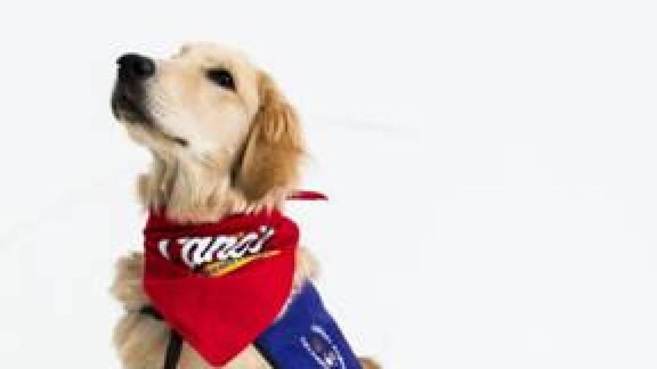 Brenley Dbacks Therapy Dog