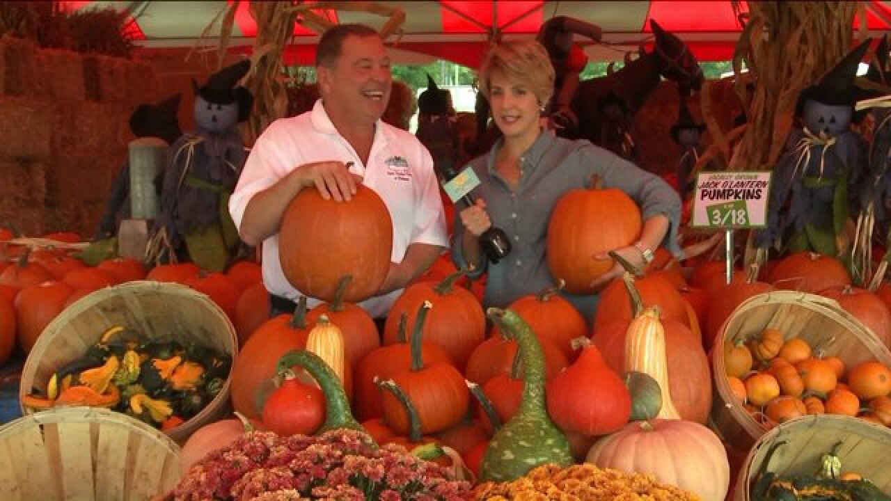 Find the best pumpkins of the patch at TomLeonard's