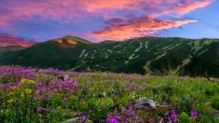 Keystone Wild Flowers