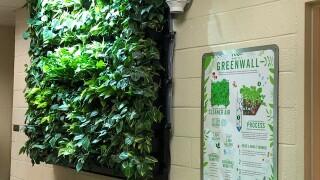 Green wall 3.jpg