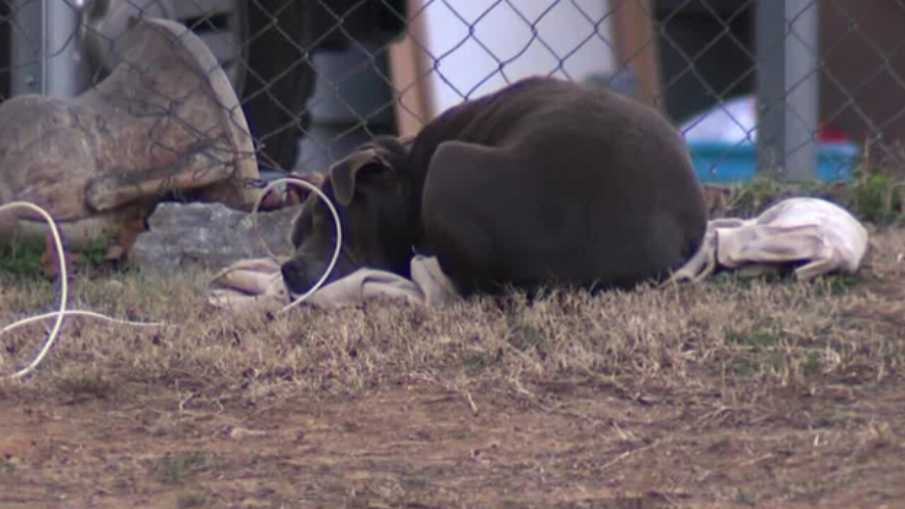 Metro Animal Care And Control Responds To Complaints About Pets Cold
