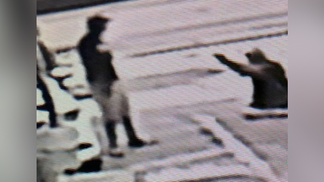 Video shows deadly parking spot shooting