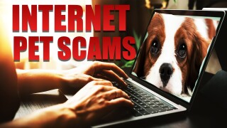 MO TOUCHMON PET SCAMS 082619.jpg