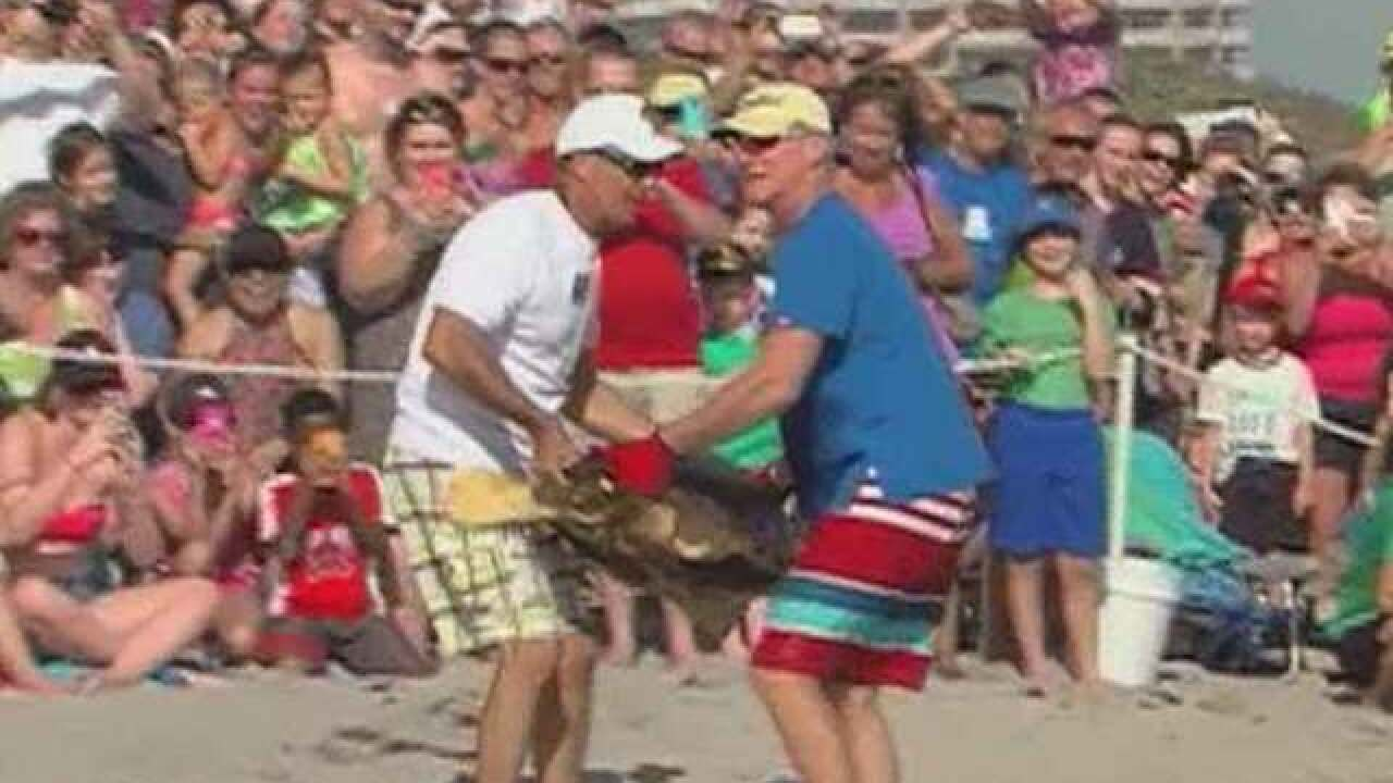 2 sea turtles released in Juno Beach