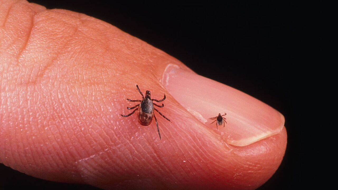 New test can diagnose Lyme disease within 15 minutes