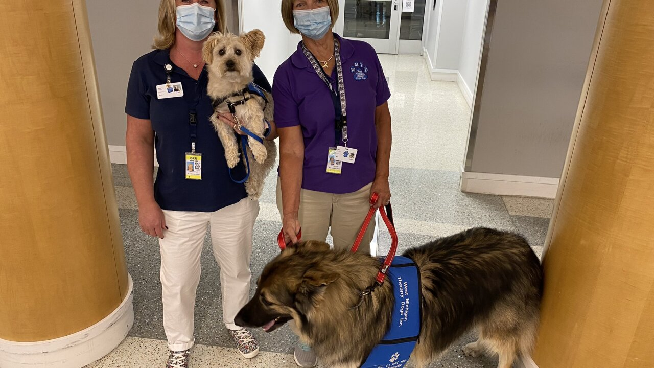 therapy dogs at ford airport 1.jpg