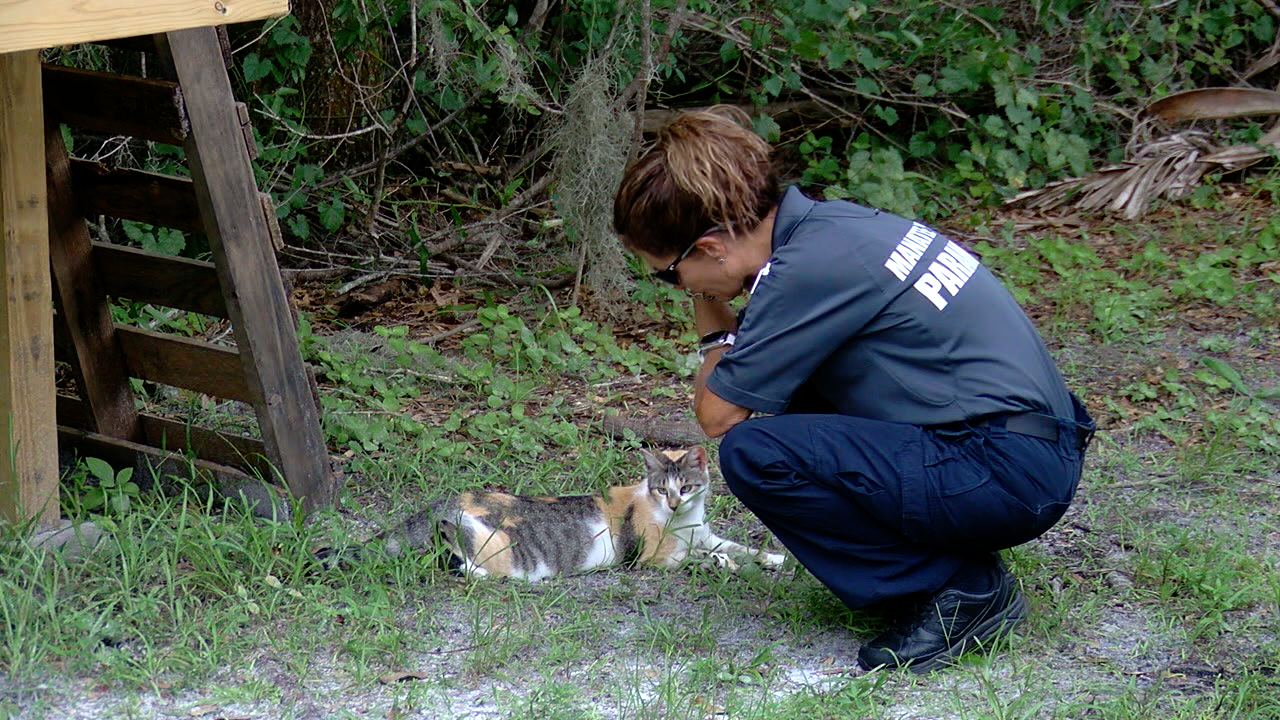 working cats Manatee County 3