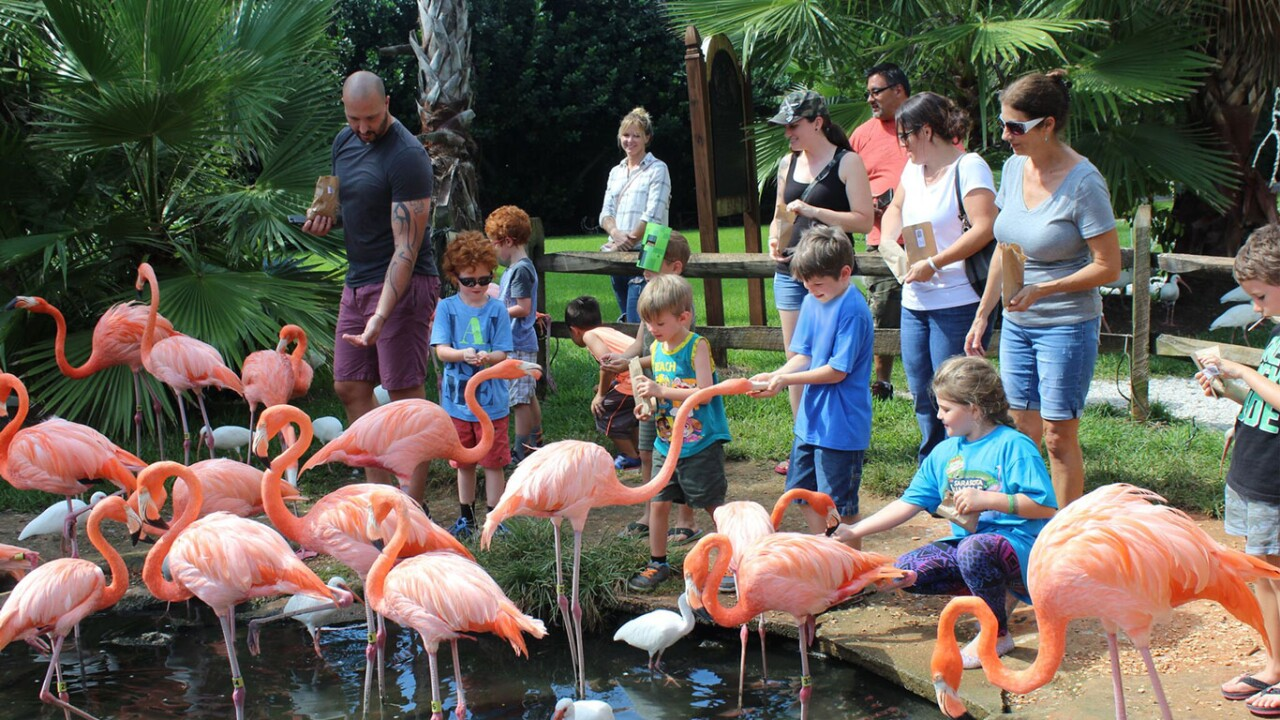 Sarasota Jungle Gardens.jpg