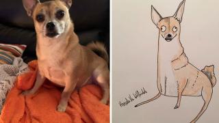 Dad's amateur pet portraits raising thousands for charity