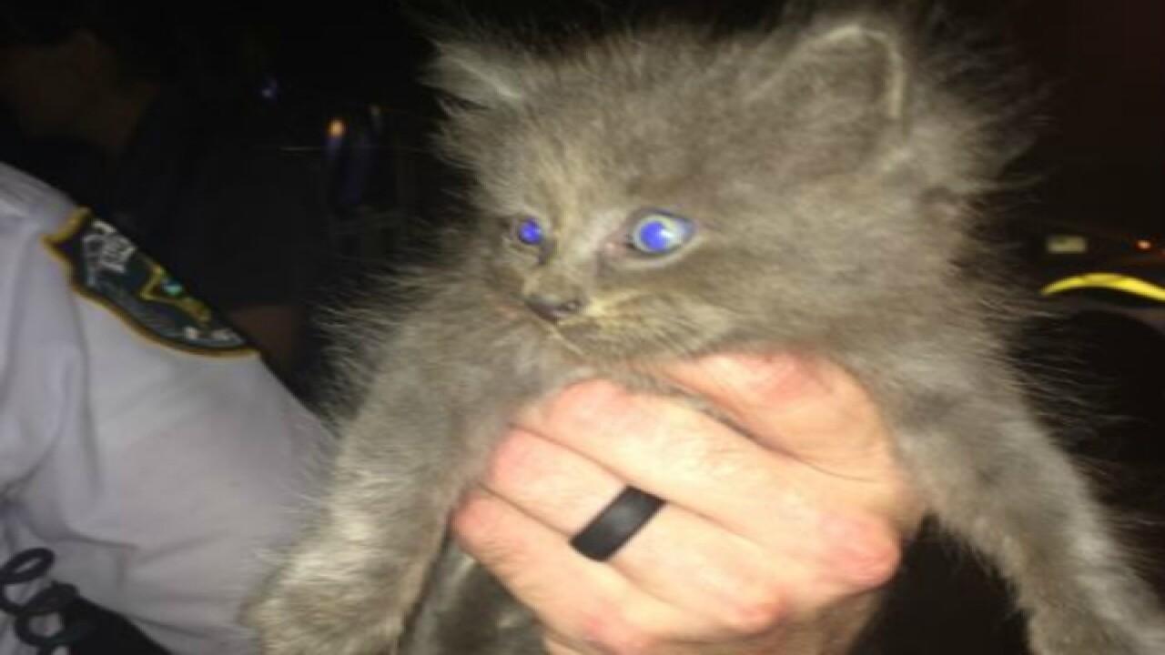 Deputies rescue kitten stuck in storm sewer