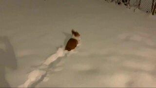 Video extra: Snow eagles and corgis