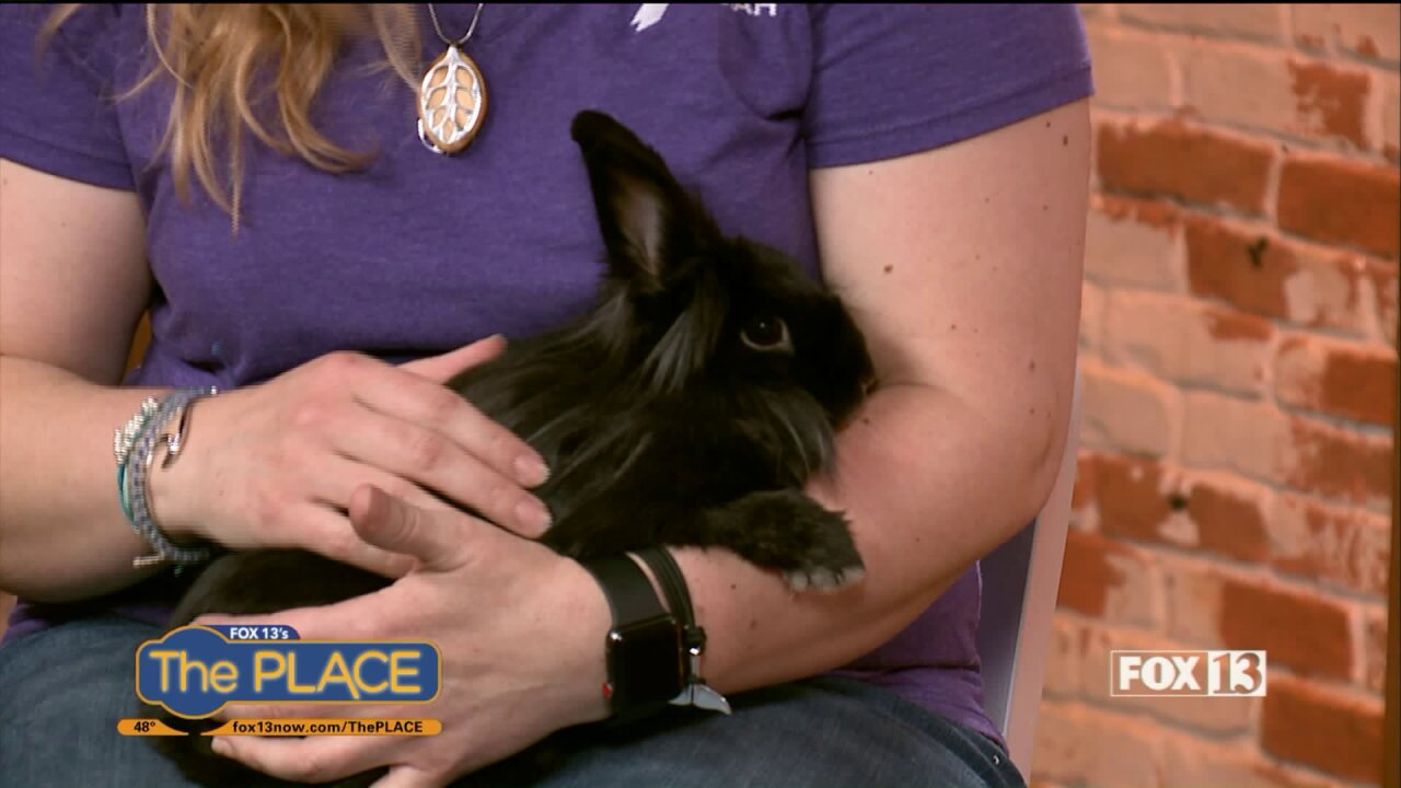 Shelter rabbits need homes, even inApril