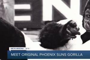 Meet the original Phoenix Suns gorilla