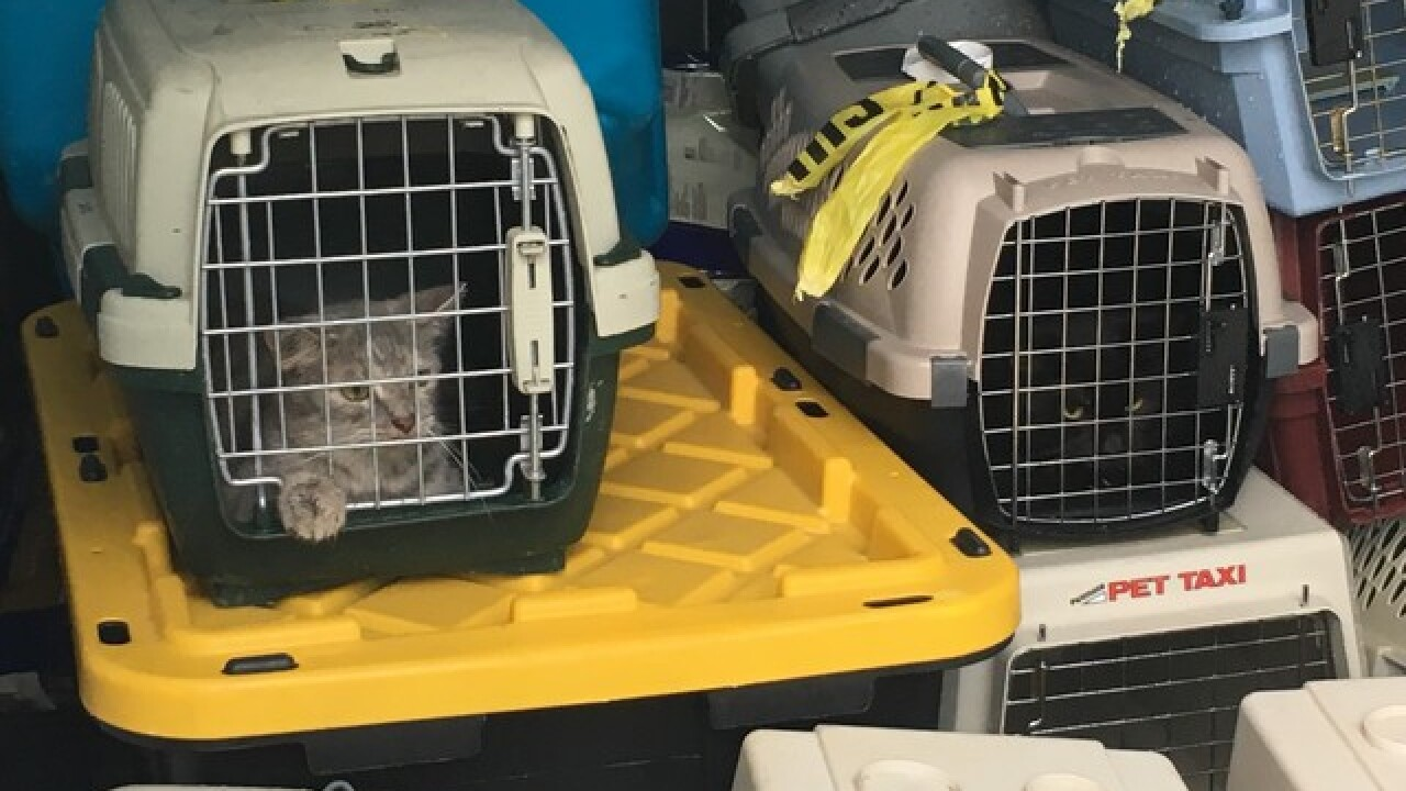 PHOTOS: 14 cats, 3 dogs pulled out of house