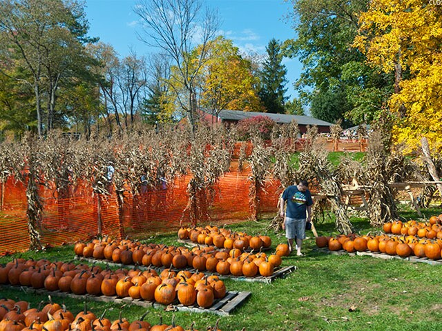 Celebrate Halloween with these 15 events in Northeast Ohio