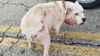 Abandoned dog in desperate need of veterinary care found in near-freezing weather