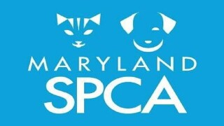 Maryland SPCA collecting toys for pets