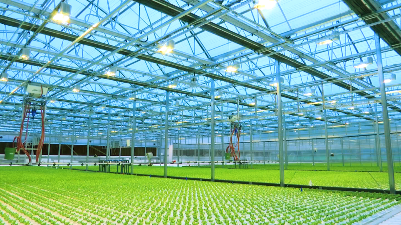 local bounti greenhouse.png
