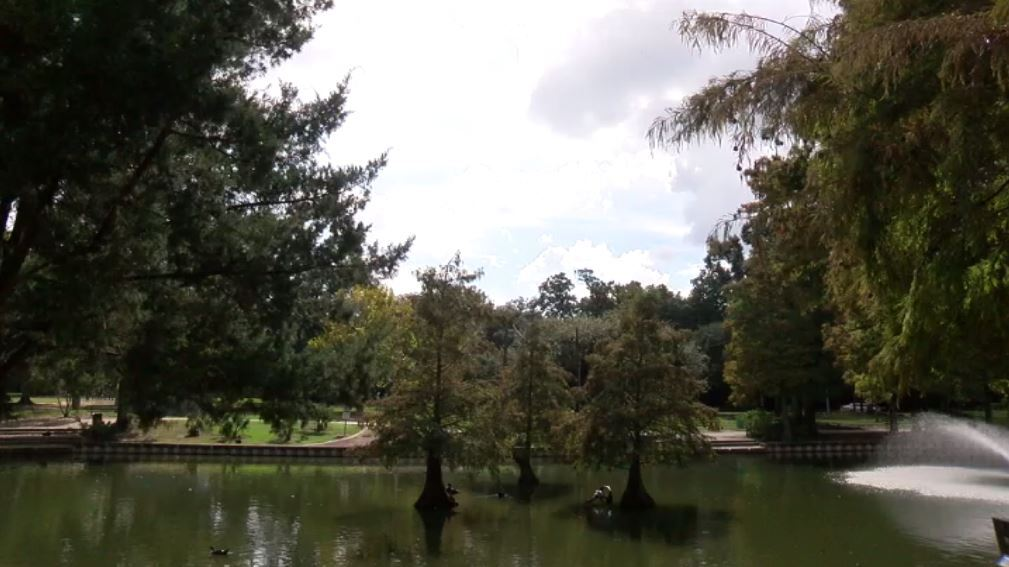 ducks at park.JPG
