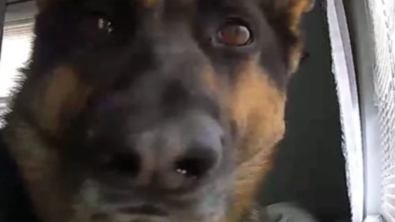 This Dog Triggered His Family's Motion Detector And The Resulting Video Is Too Cute To Miss