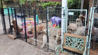 19 dogs die in fire at Florida dog breeder's home.jfif
