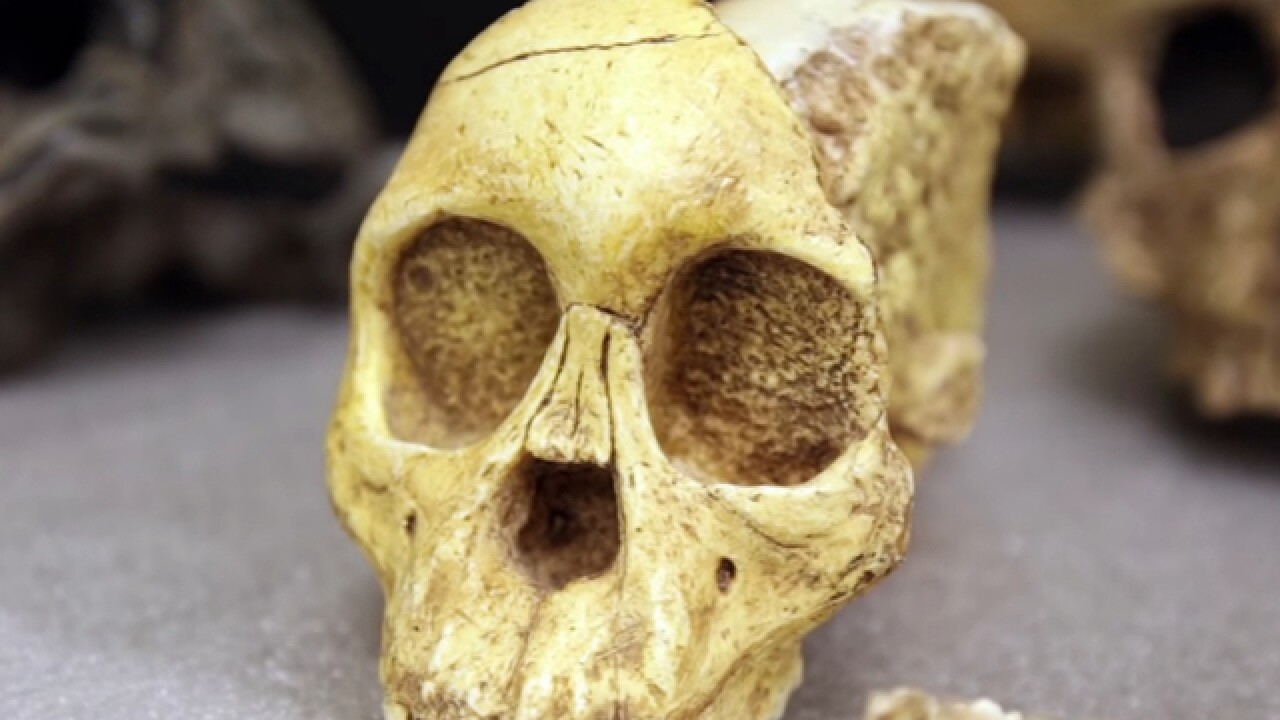 New ancient relative may be a missing link