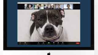 For a $100 donation, a cat or dog from the shelter will join your company's next video call for 10 minutes.