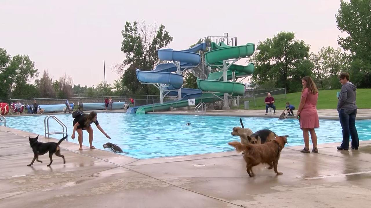 Drool In The Pool