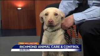 Paws for Pets – Richmond Animal Care & Control