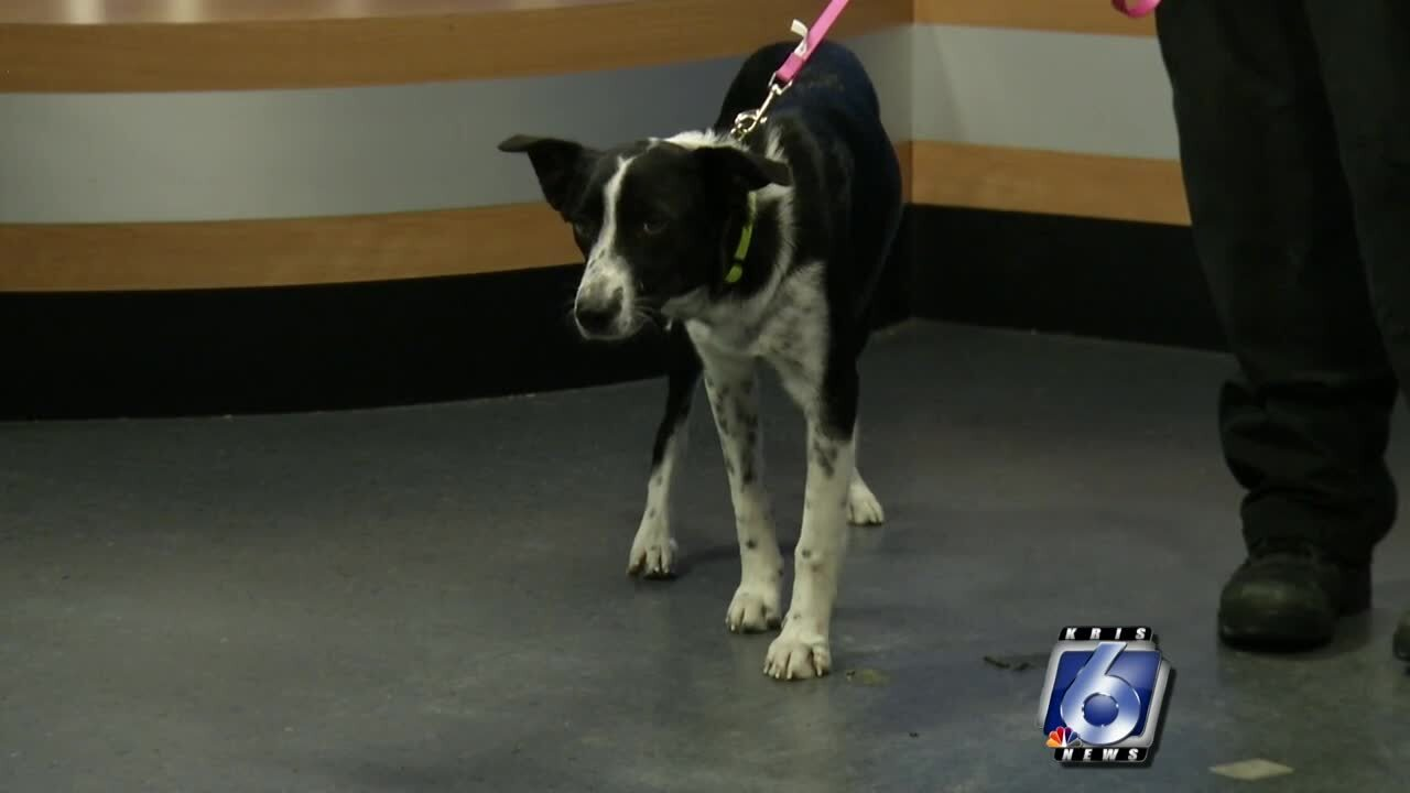 Pet of the Week: Holly
