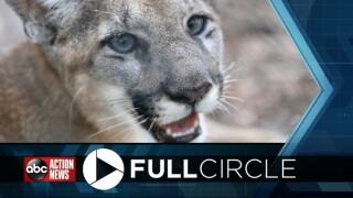 panther full circle.jpg