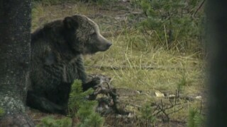 This Week in Fish and Wildlife: Bears are beginning to stir