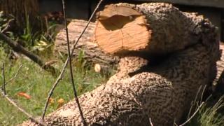 Tree Mess.PNG