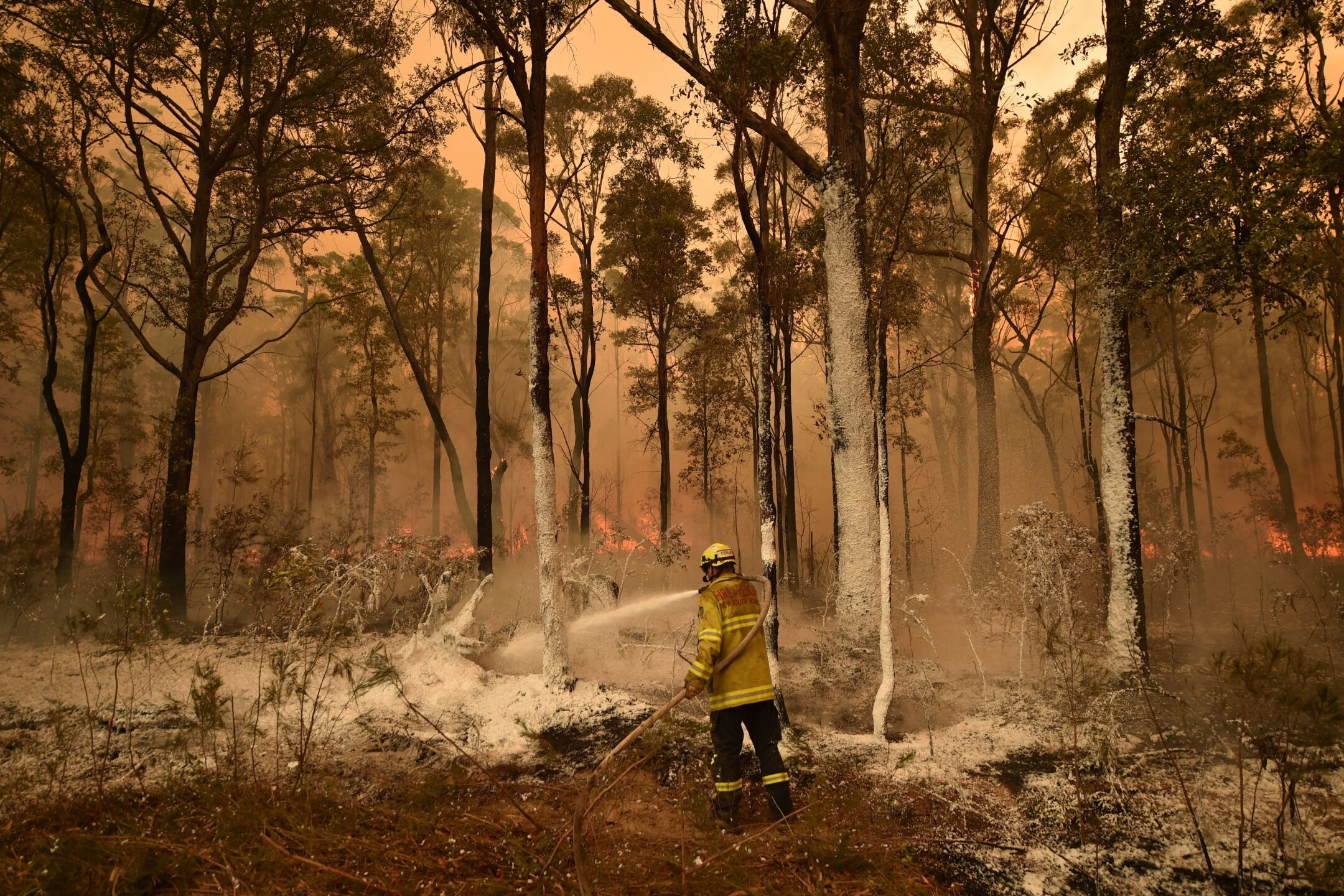 Photos: New South Wales declares a 7-day state of emergency as Australia's deadly bushfires rage