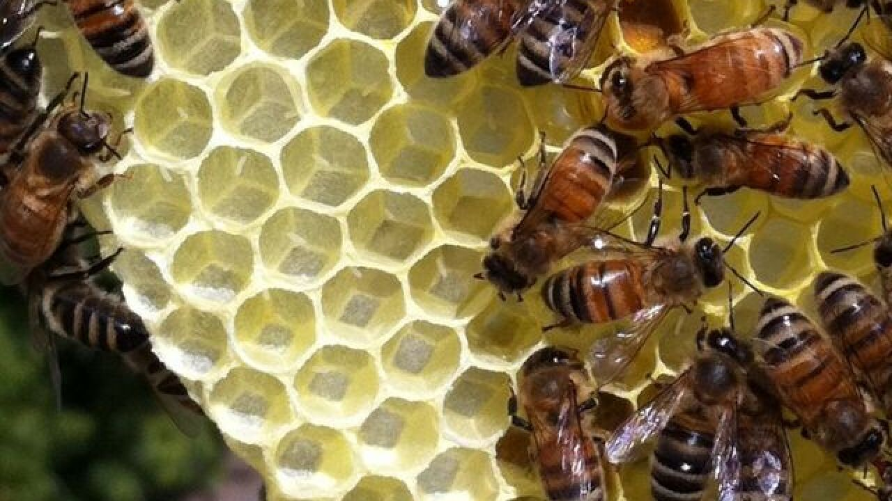 Elderly woman in Arizona stung more than 100 times by bee swarm