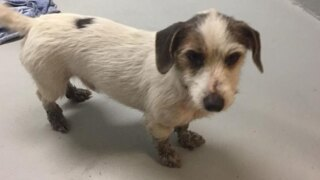 Little dog found in Martin County now in search of home