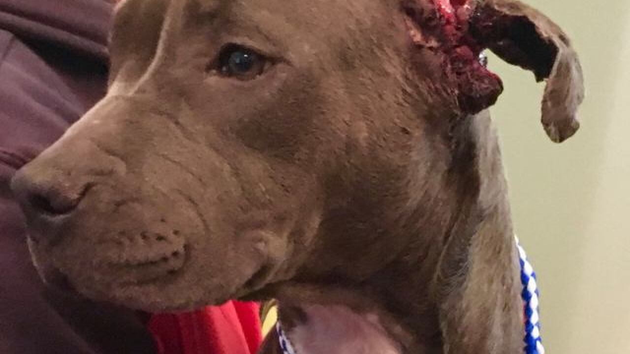 Injured puppy rescued off Racine street